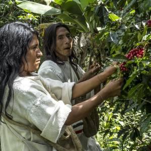 Wir unterstützen Kaffee Kogi – Kaffee mit Sinn